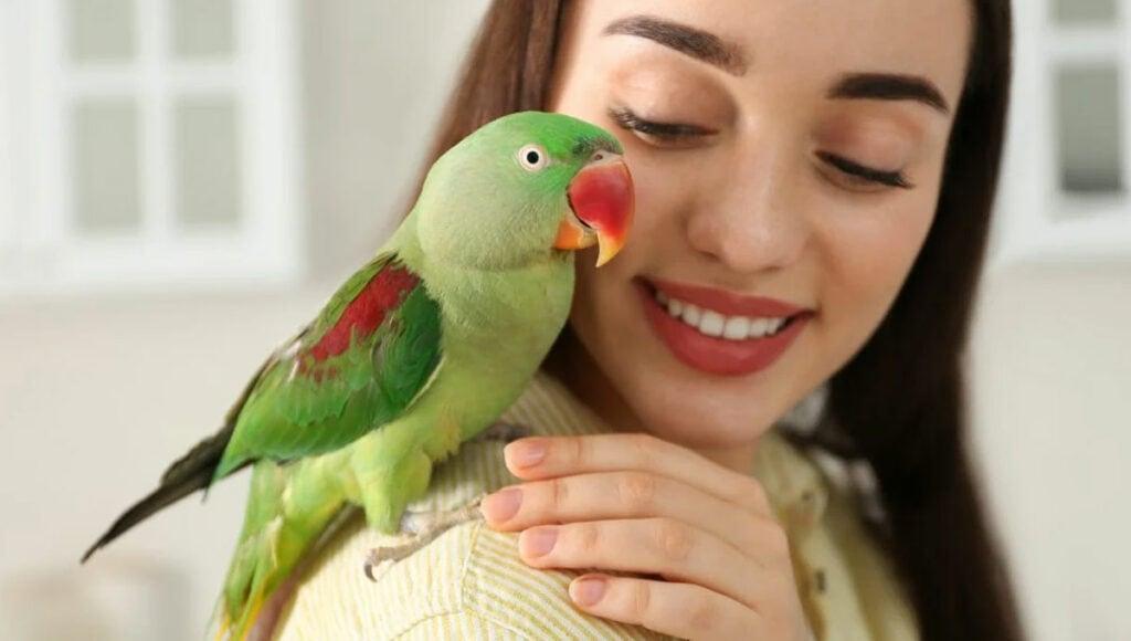 papousek-jako-domaci-mazlicek